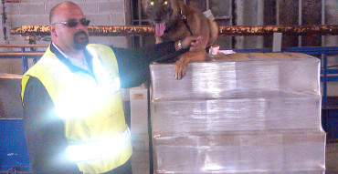 Handler and Dog Inspecting Pallet