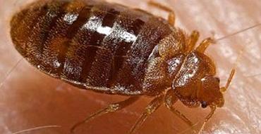 bedbug_detection